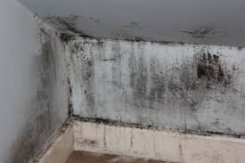 black mould on walls